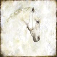 "Equus II Tierney M. Miller 60"" x 60"" oil on canvas $6800"