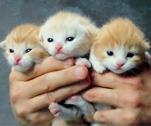 An image of three kittens