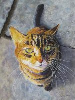 """Jules, the Cat Patricia Hunter 16"""" x 12"""" watercolor on paper $500"""